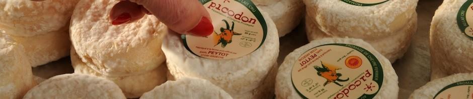 Picodon Peytot